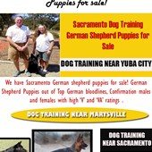 German Shepard Puppies Near Me